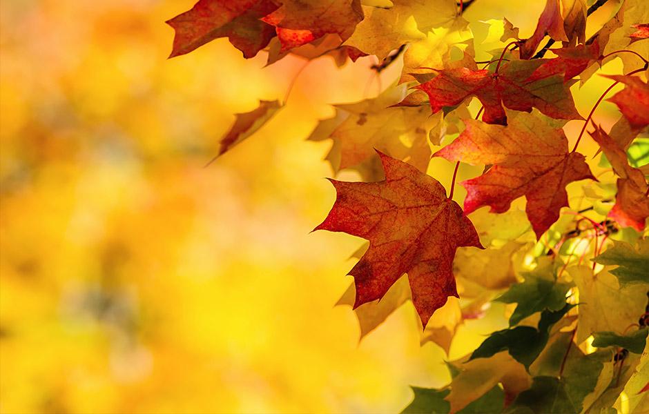 Herbst-Aktionen